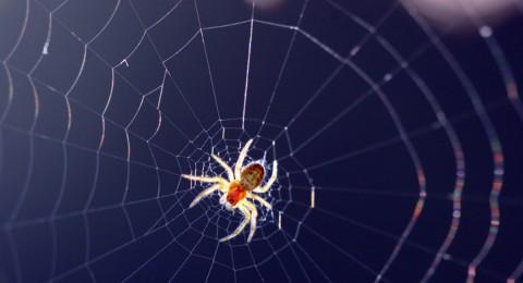 العناكب يمكنها أكل جميع البشر على وجه الأرض