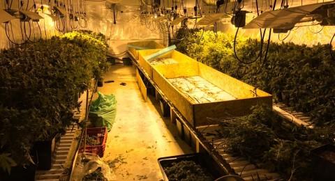 المركز: الشرطة تكشف عن دفيئة مخدرات