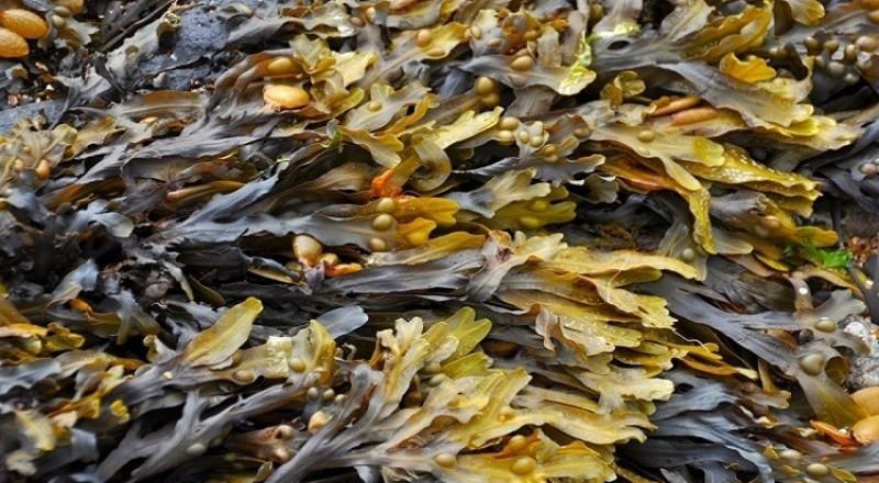 العلماء الروس يستخدمون الفطر البحري لتطوير علاج للسرطان