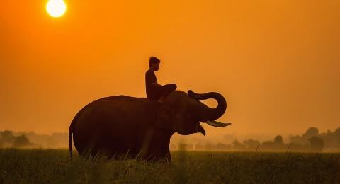 خرطوم الفيل يقتل مدربه