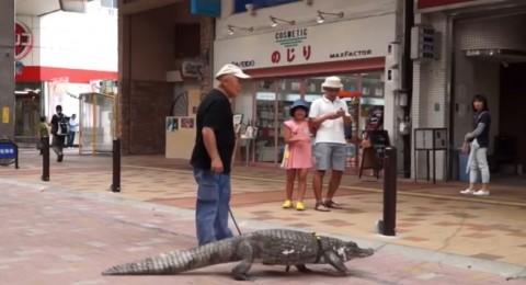 ياباني عاش مع تمساح 34 عاماً