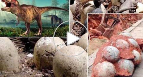 اكتشاف 5 بيضات لـ ديناصور عاش قبل 70 مليون سنة