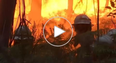 البرتغال: حرائق غابات تودي بحياة 62 شخصا