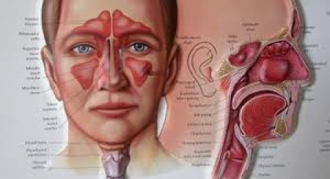 كيف تتغلبون على التهابات الجيوب الانفية؟