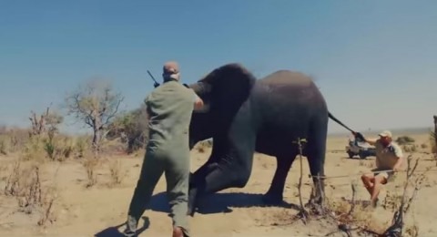الأمير هاري يُنقذ أفيال إفريقيا