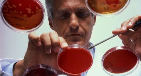 دراسة: الميكروبات قد تكون السبب في السمنة