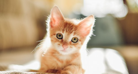 تحذير من تربية القطط في المنازل
