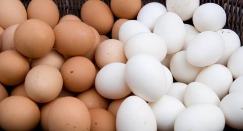 هل البيض البني أفضل من الأبيض؟ ولماذا أغلى؟